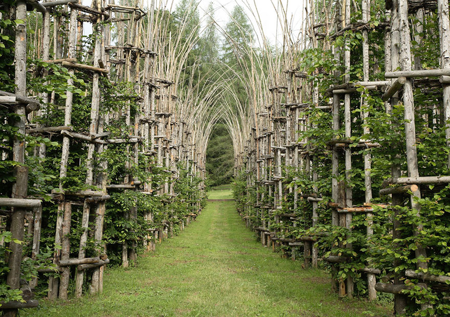 TREE CATHEDRAL (photos)
