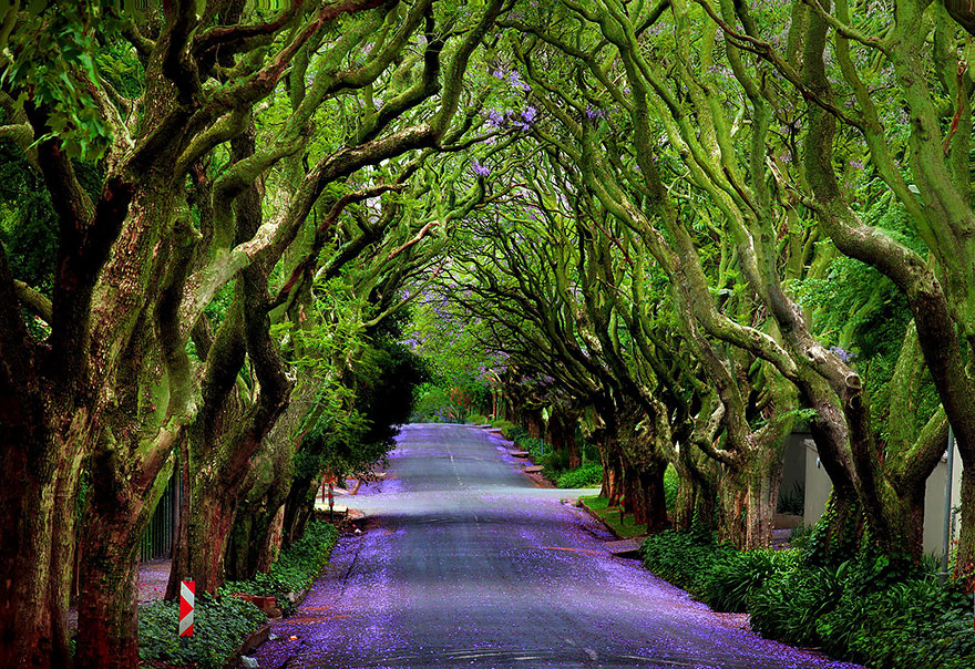 MAGICAL PATHS (photos)
