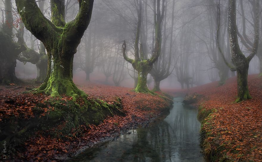 BEAUTIFUL FOREST WALKS (photos)
