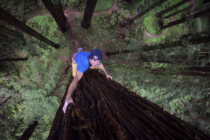 FREE CLIMBING REDWOODS (video)
