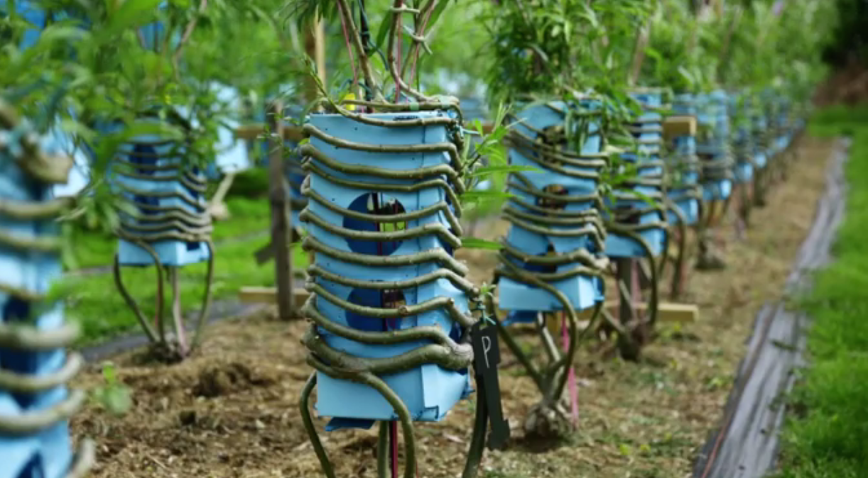THE MAN WHO GROWS TREES INTO CHAIRS (video)