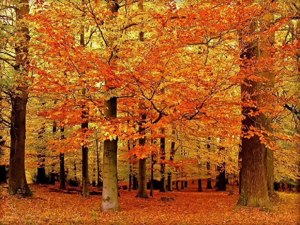 DIFFERENCES IN FALL FOLIAGE (video)