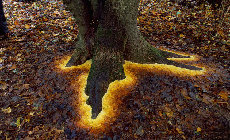 THE ART OF ANDY GOLDSWORTHY (photo essay)