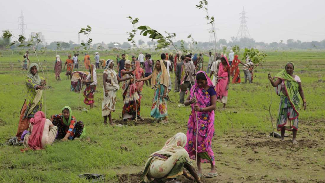 50 MILLION TREES PLANTED IN INDIA (short article)