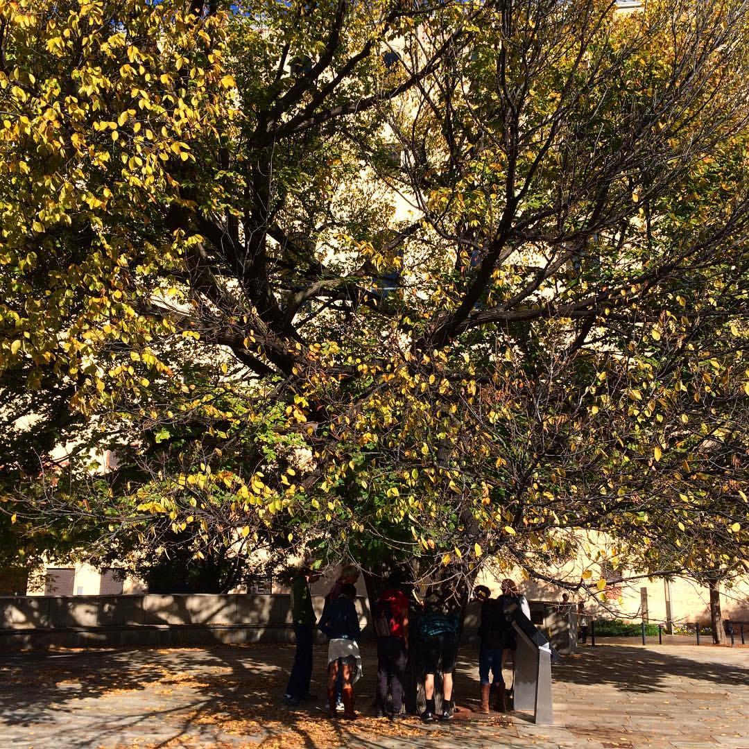 RETREETers VISIT THE SURVIVOR TREE