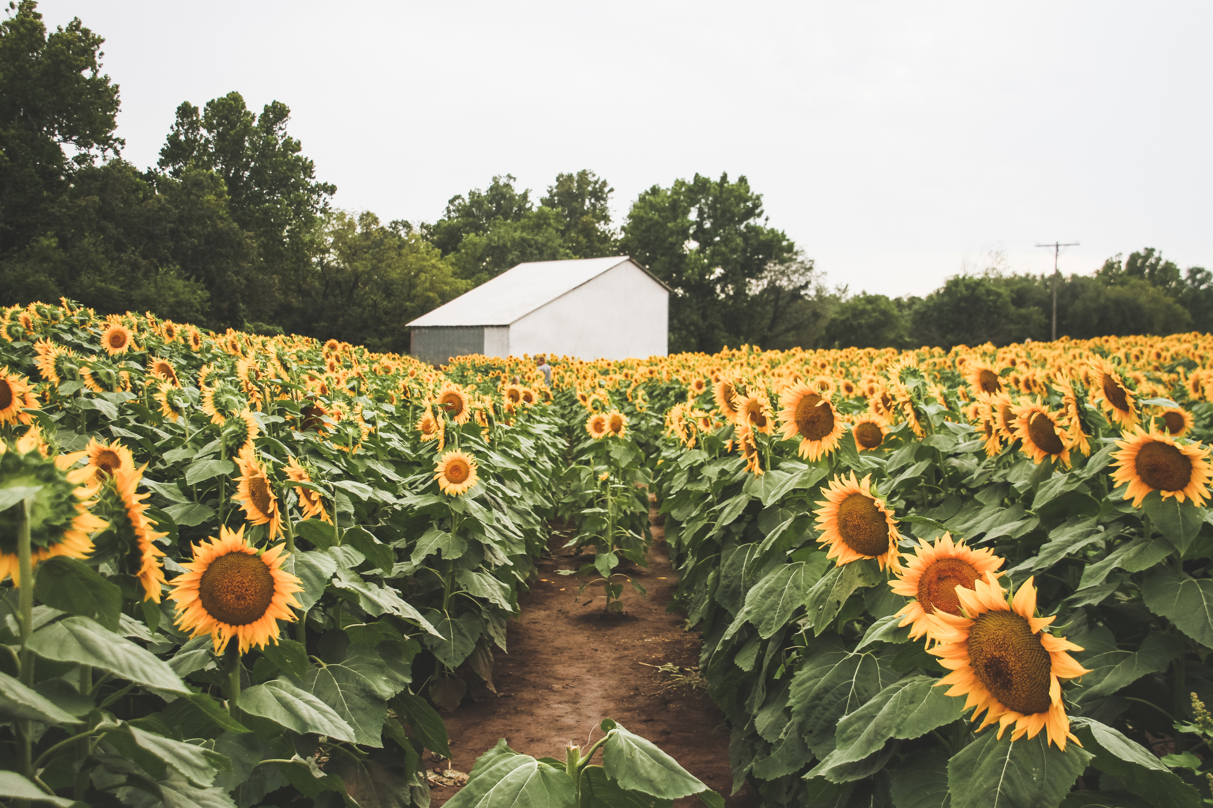 Letters Are Lovely | The Sunflower State