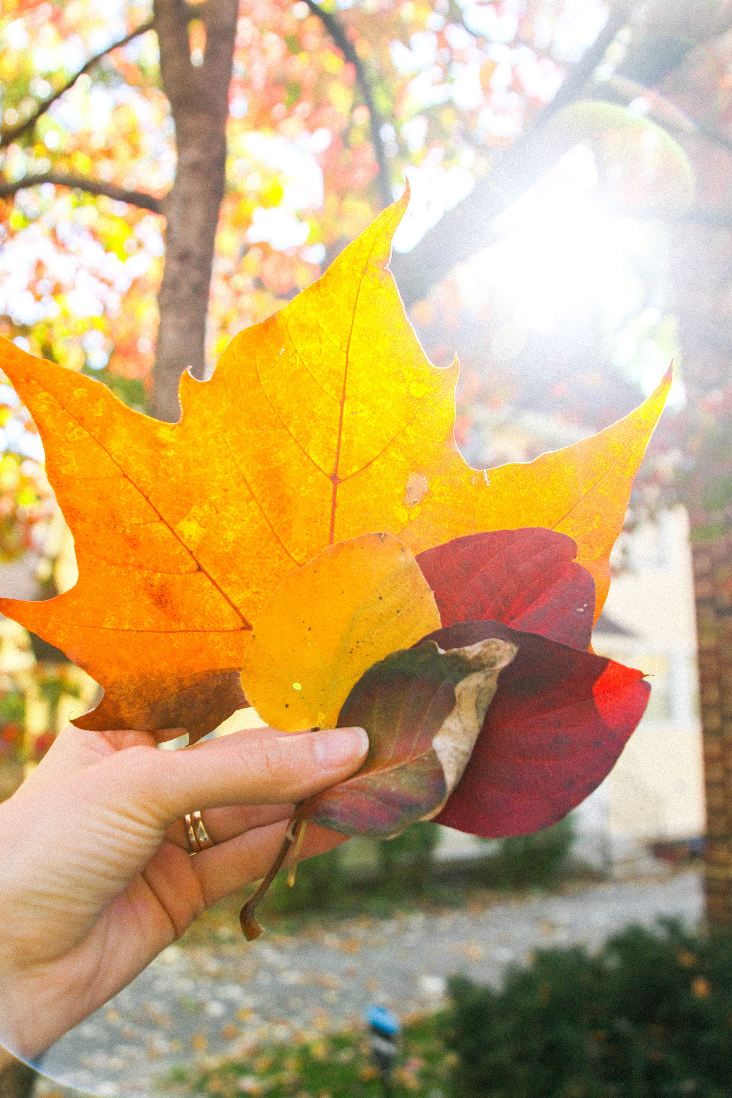 Letters Are Lovely | Fall Foliage