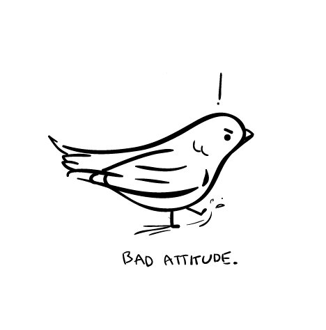 tiny-angry-birb.jpg