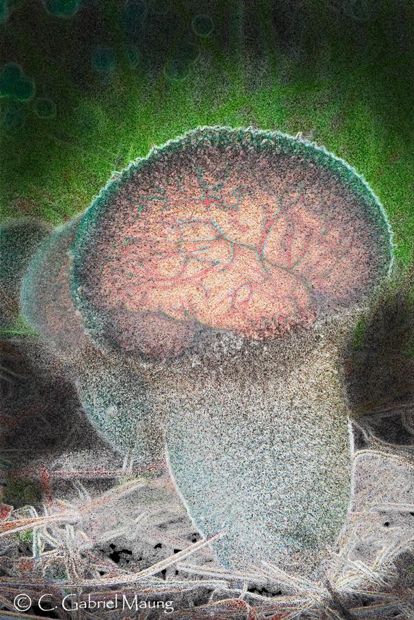 Brain-Mushroom Composite