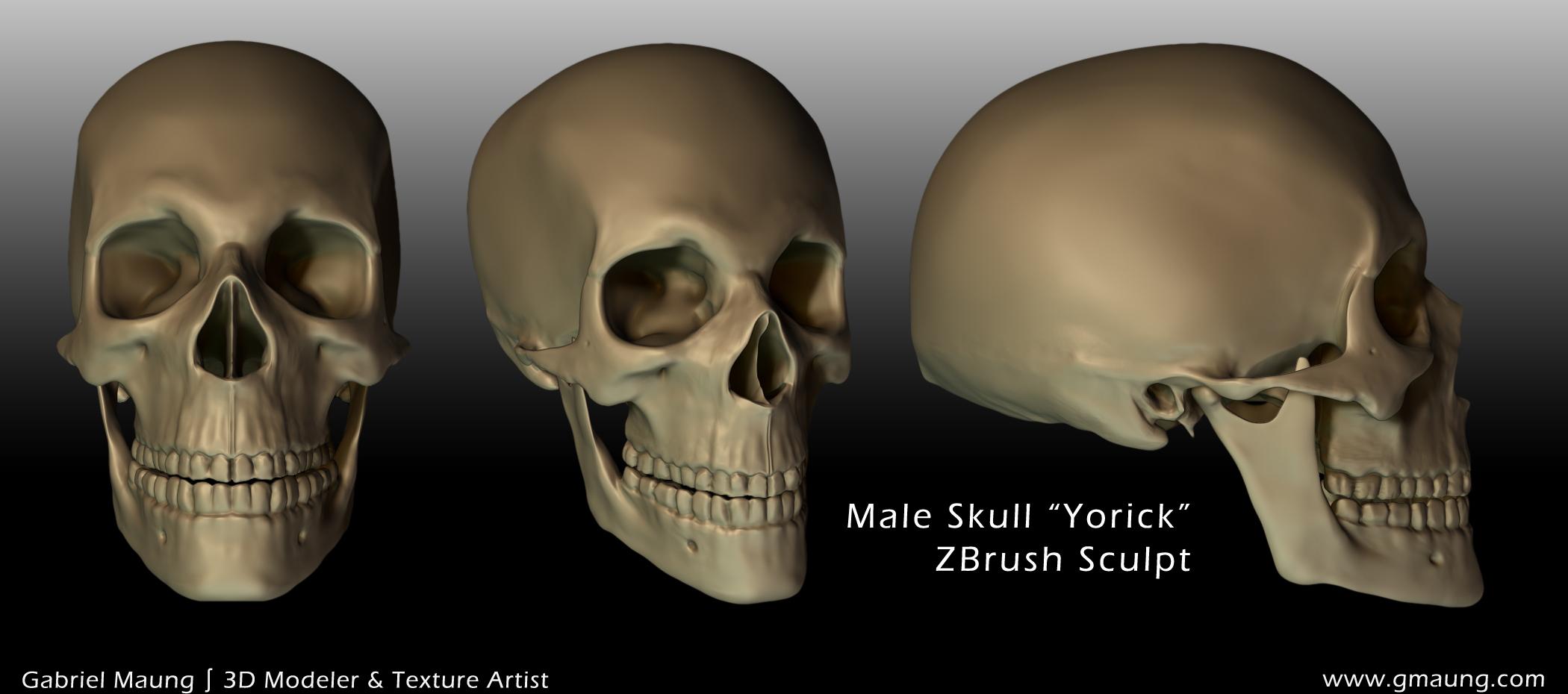 Skull Anterior & Lateral Sides