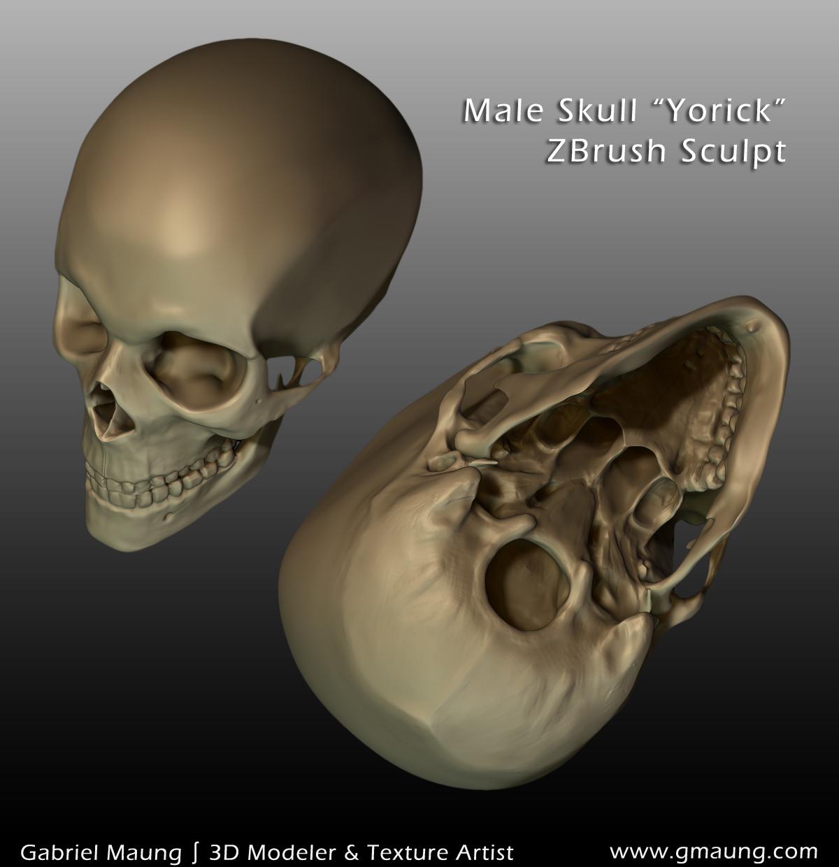 Skull Superior & Inferior Sides