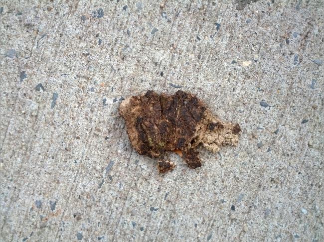 Where the dog poop on the sidewalk looks like something…