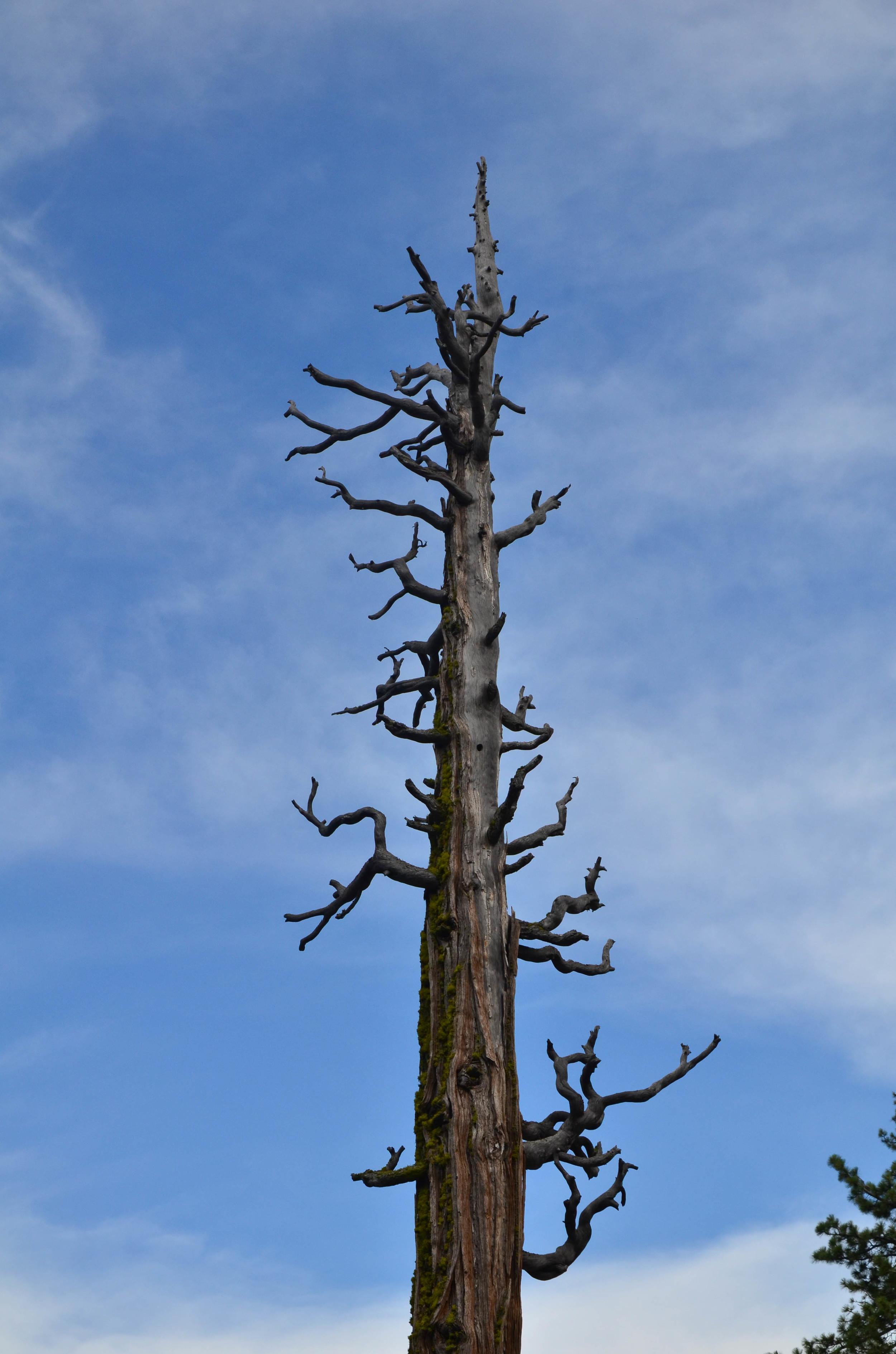 Lake_Tahoe_18.jpg