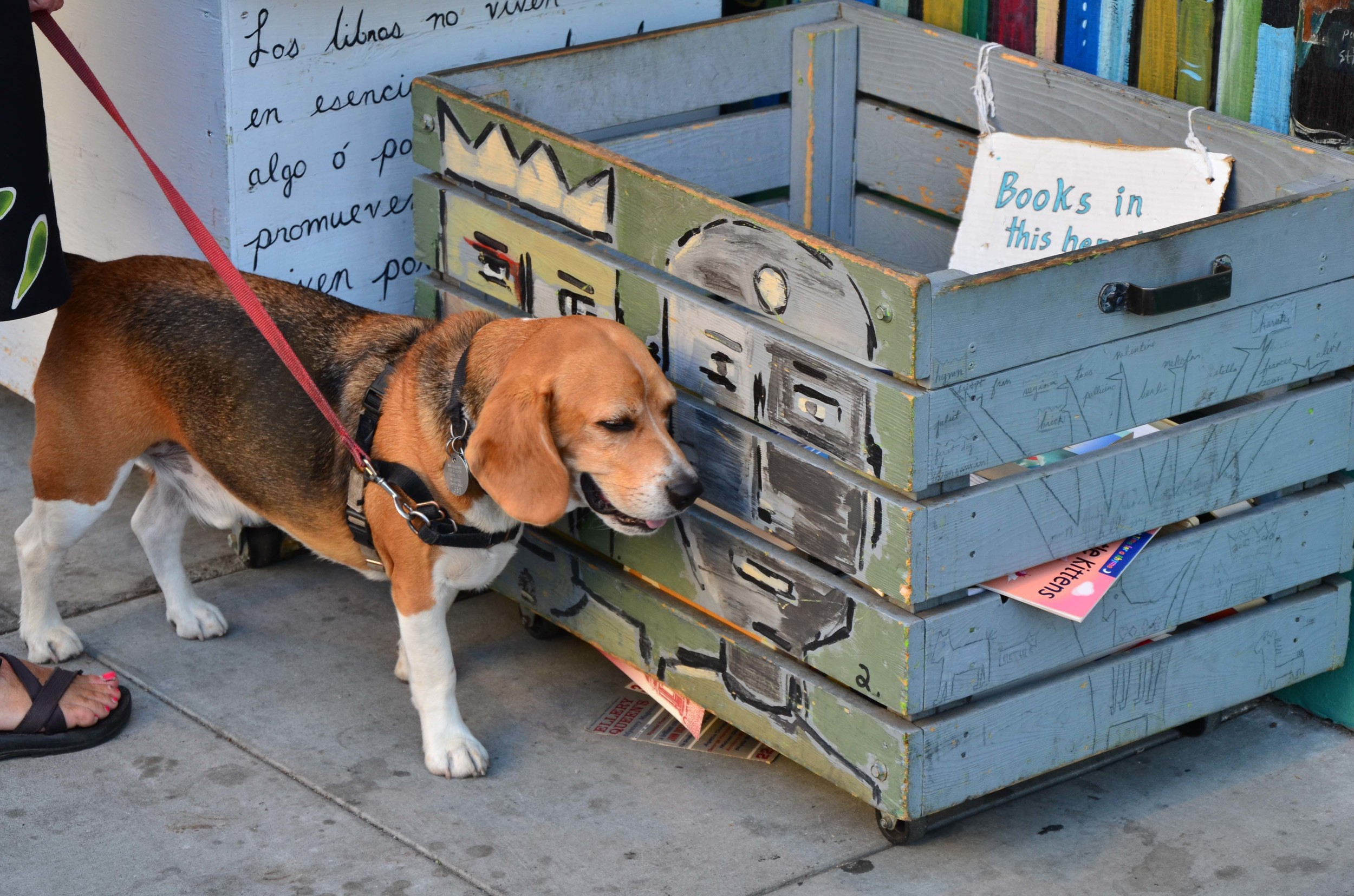 Free Books Bin at Dog Eared Books