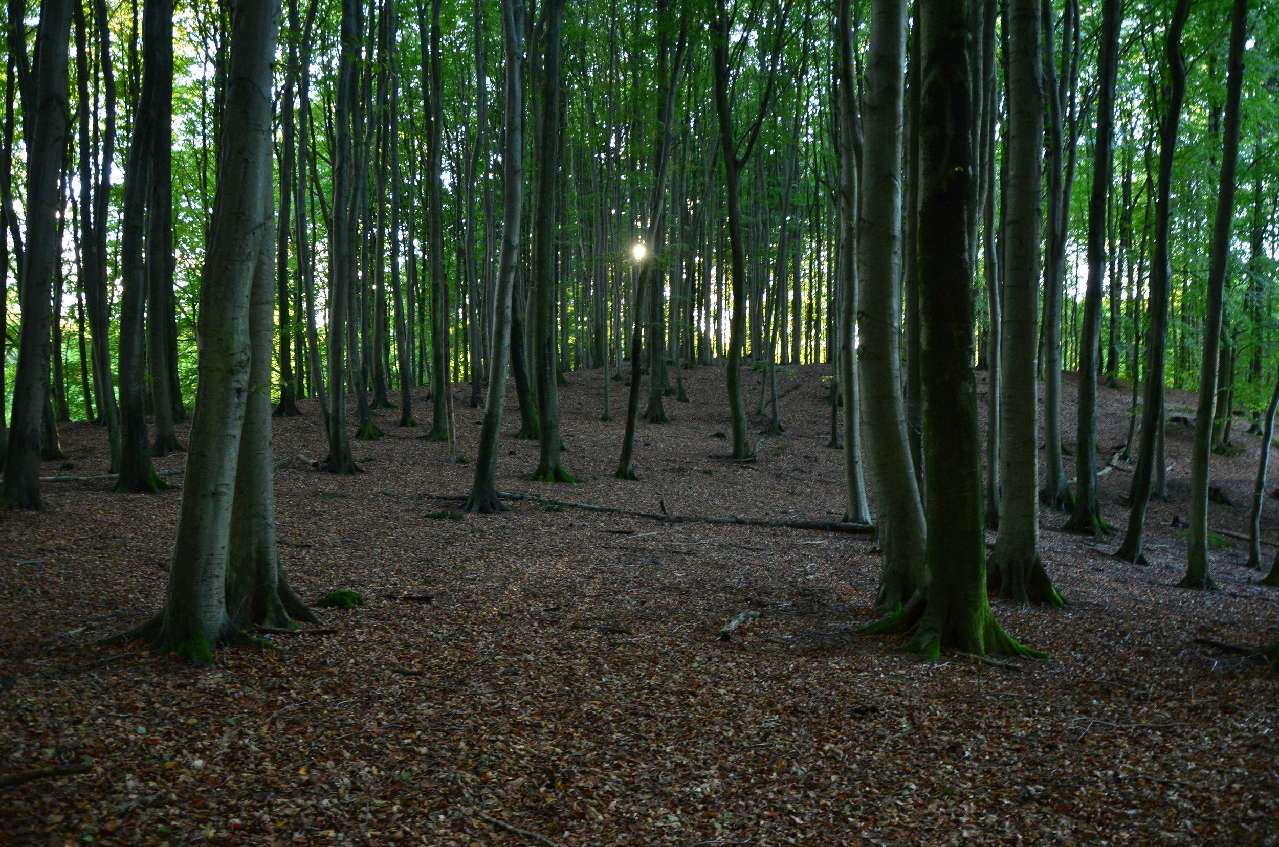 Bergwaldprojekt_Sassnitz_Ruegen_Moor_150dpi_20171014_Credits_CC-BY-SA_Jenni_Ottilie_Keppler-68.jpg