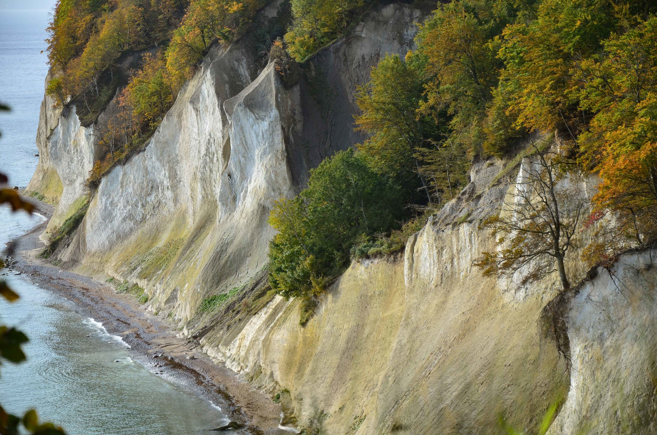 Bergwaldprojekt_Sassnitz_Ruegen_Moor_150dpi_20171014_Credits_CC-BY-SA_Jenni_Ottilie_Keppler-291.jpg