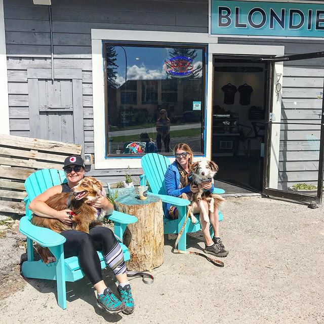 Did you know that our patios are dog friendly 🐕 we love our furry friends @mika_the_mini_aussie came for a visit. #canmore #sicamous #onlyatblondiescafe