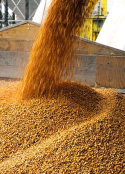 1-grain_small2.jpg