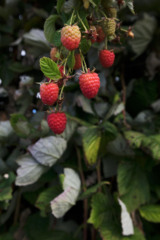 berry_web-2.jpg