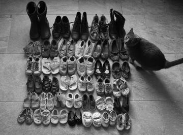 Josey-Shoes