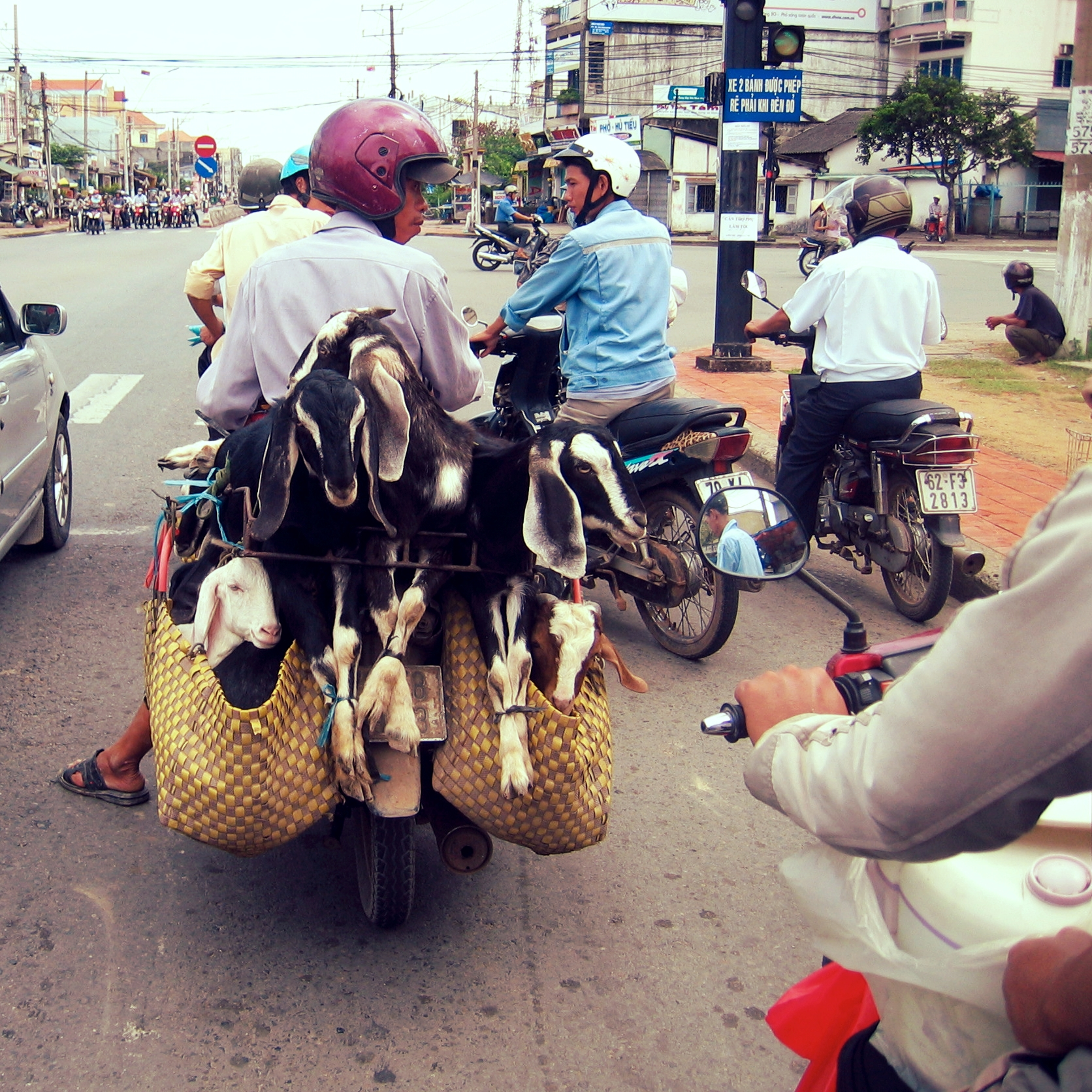 Piloting a motorbike across Vietnam – Oct 2008. A battalion of mopeds waits to attack from the opposite intersection. This was one of the tamer moments, allowing me to snap a quick photo. Also, goats.