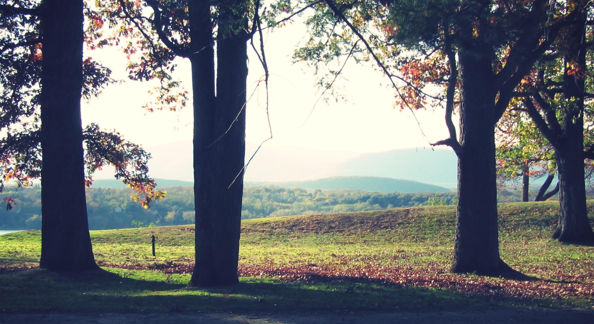 forest overlook.jpg