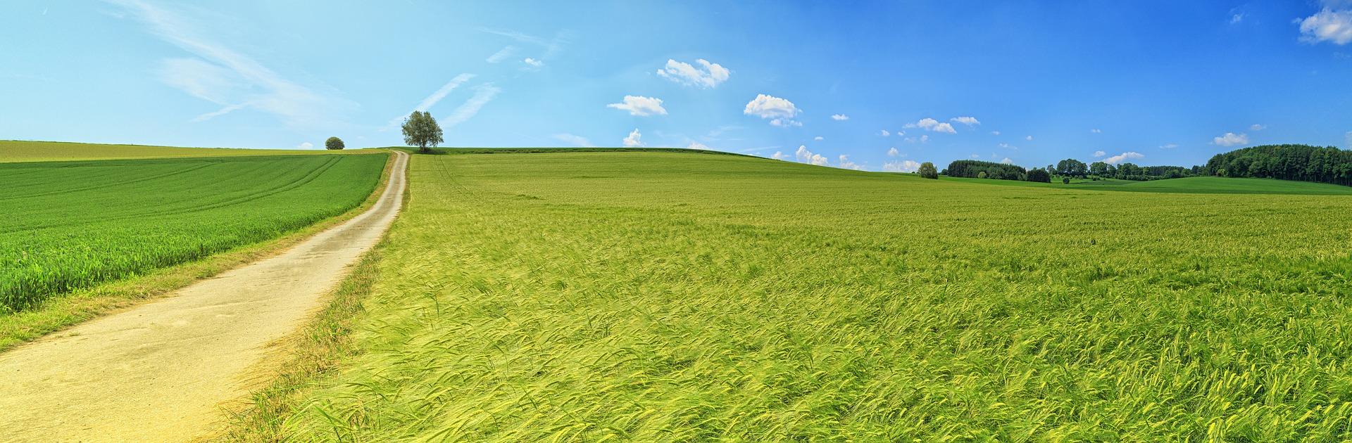 Farmland leading to the horizon.jpg
