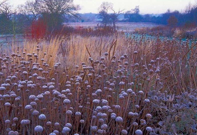 Oudolf Winter Garden  Photo :  Piet Oudolf