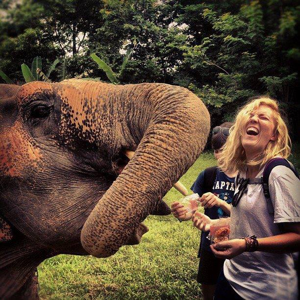 Feeding Motala at the elephant hospital.