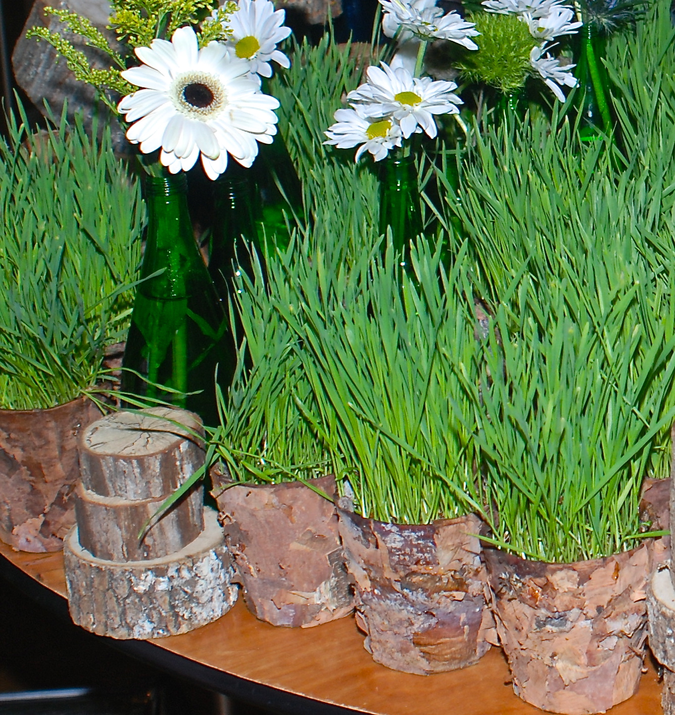 Wood Bark Covered Buckets with  Wheat Grass
