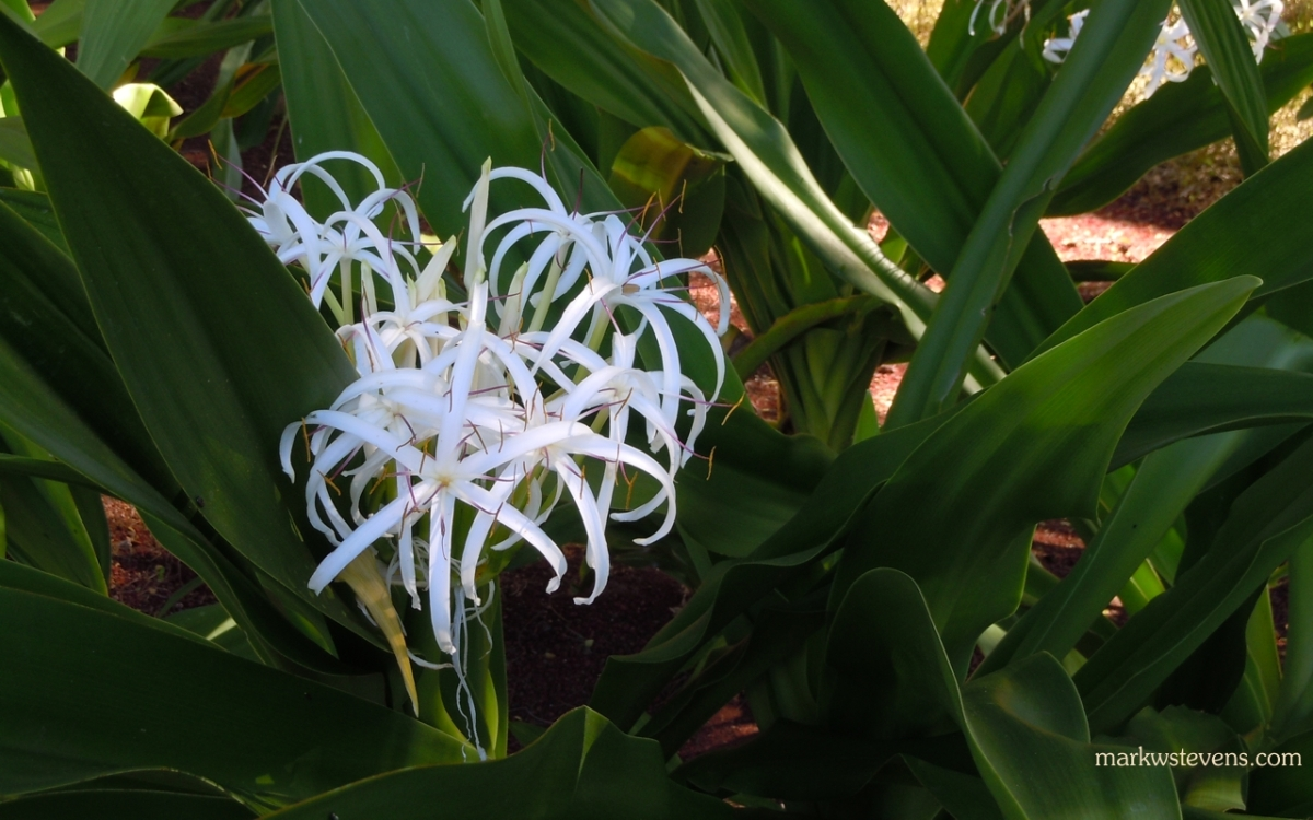 Cool Looking White Flower