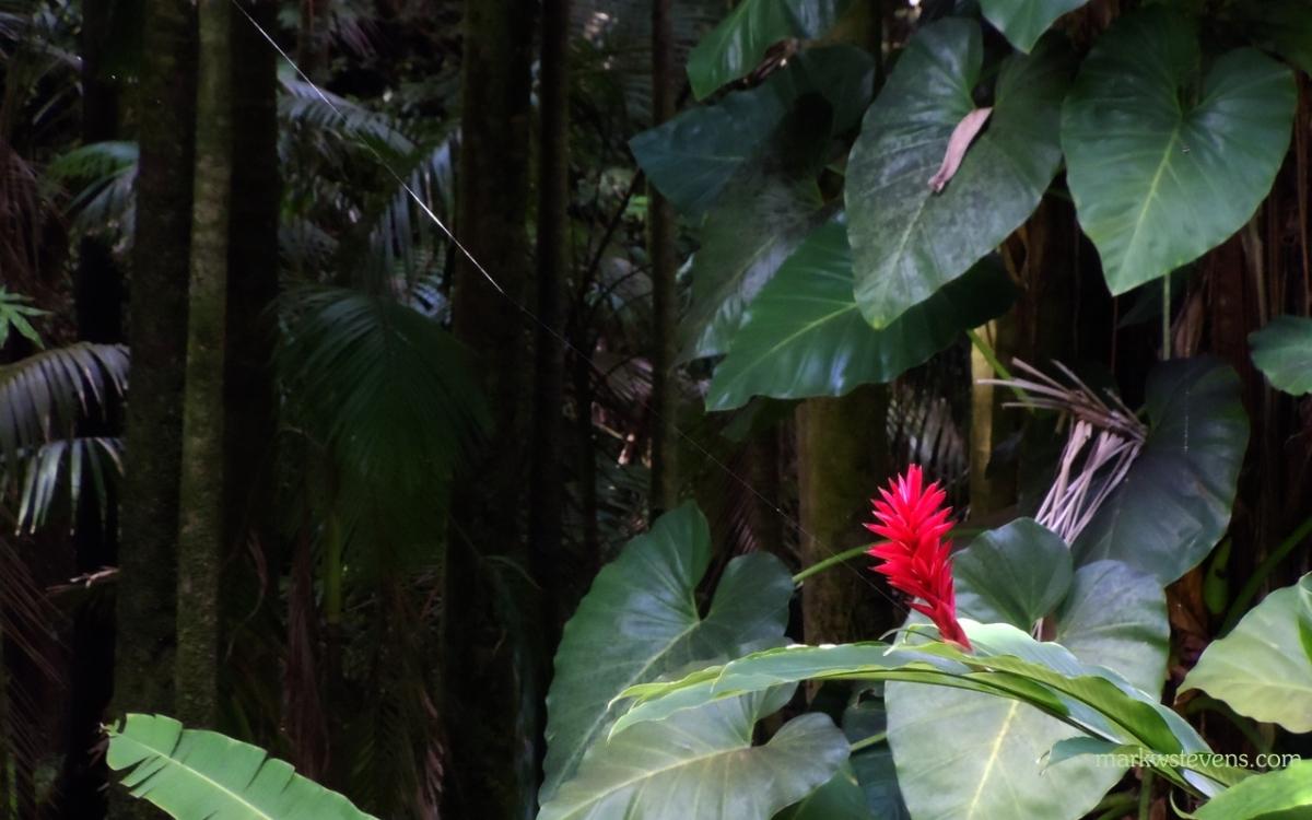 Weird Flower and Spider Web