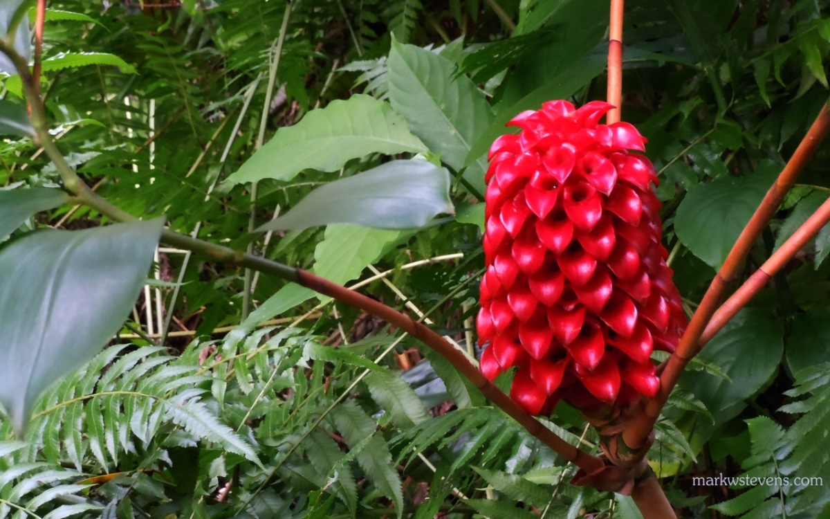 I think this is called a Wax Flower or something.