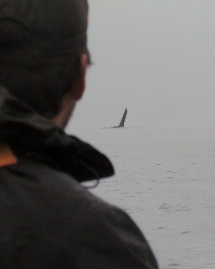 Our lead guide, James, watches a male orca from his kayak at Orcas Cove. Photo by Brent Buckley - Thank you!