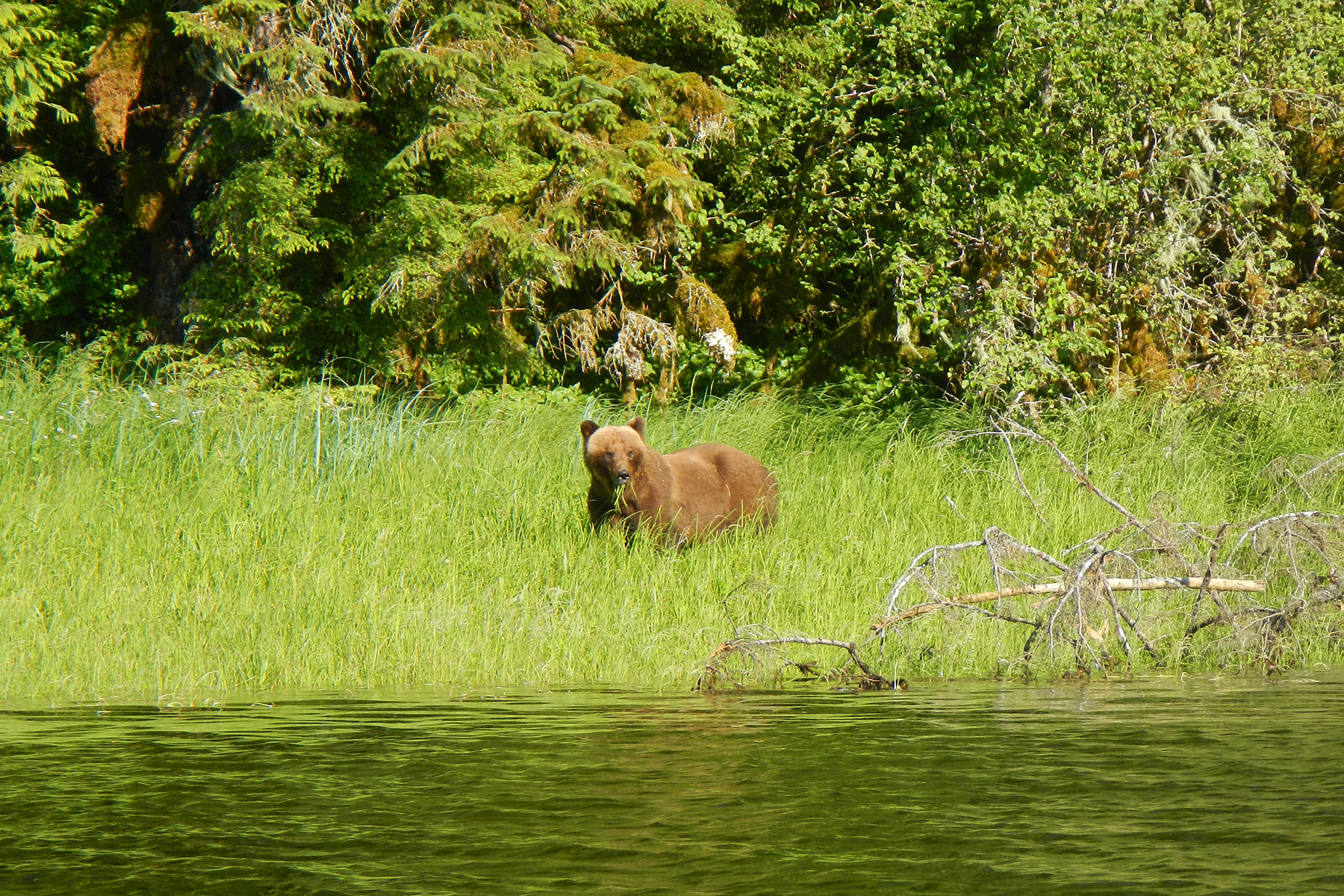 In most areas of Southeast Alaska July and August are the best months to see bears.