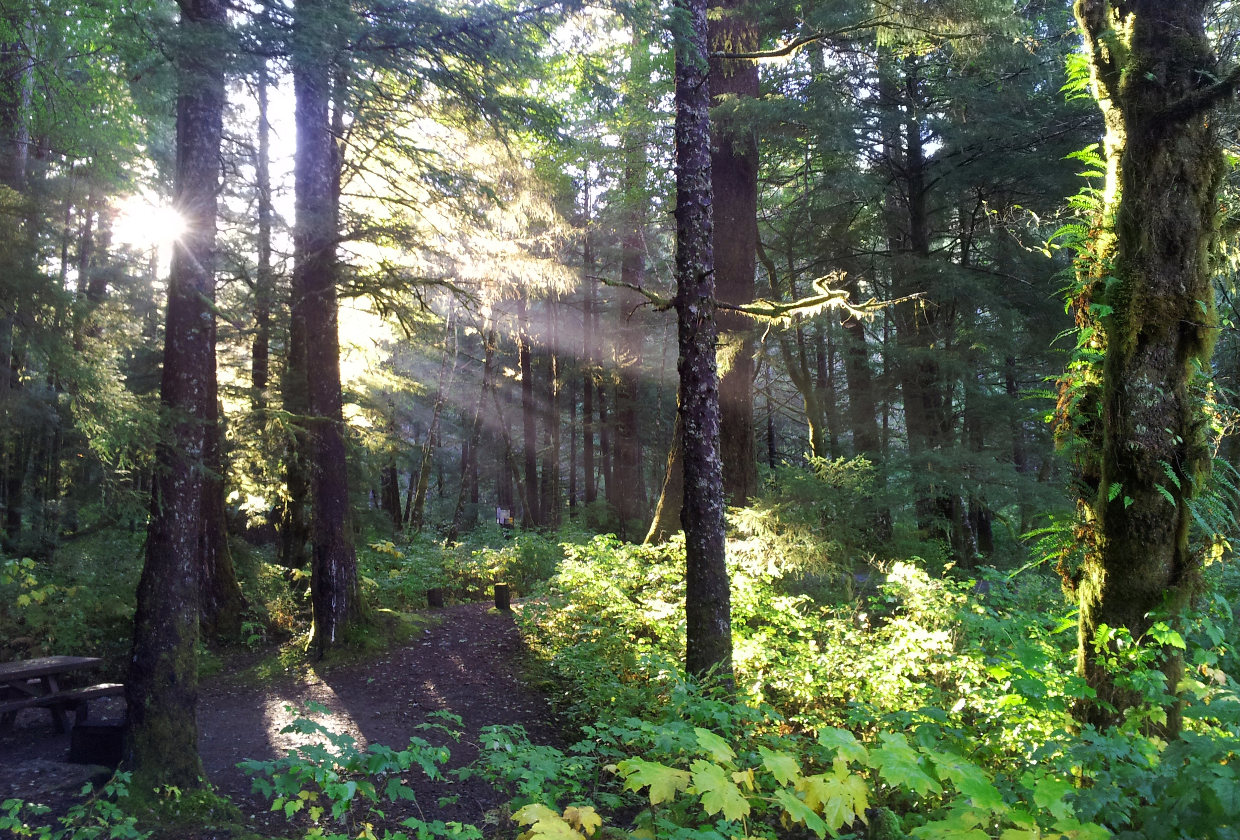 The beautiful, rainy rainforest of Southeast Alaska.