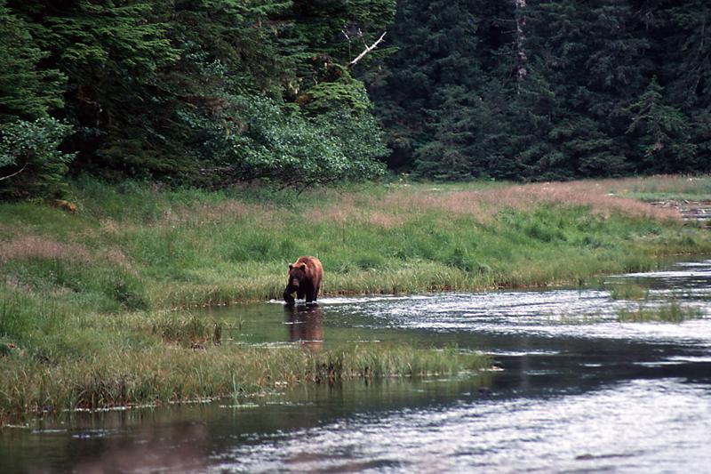 Brown bear. Photo by Dan Kiely.