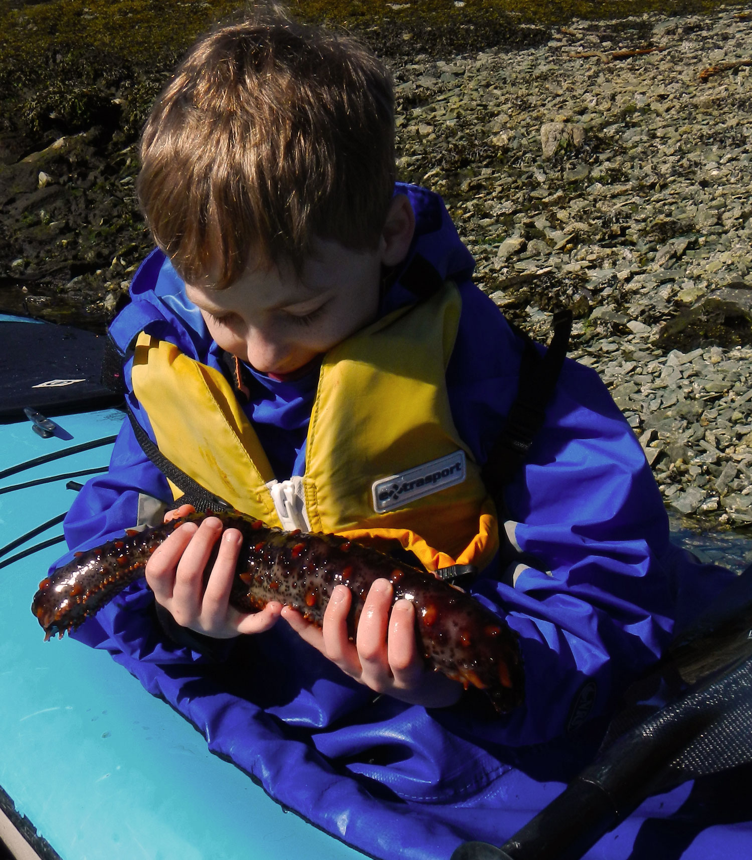 Declan examines a sea cucumber in Snow's Cove on the Ketchikan Kayak tour.