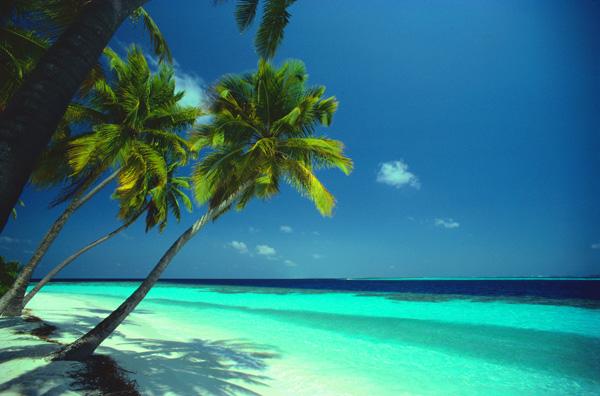 07-Beach-Palms-jul_lg.jpg