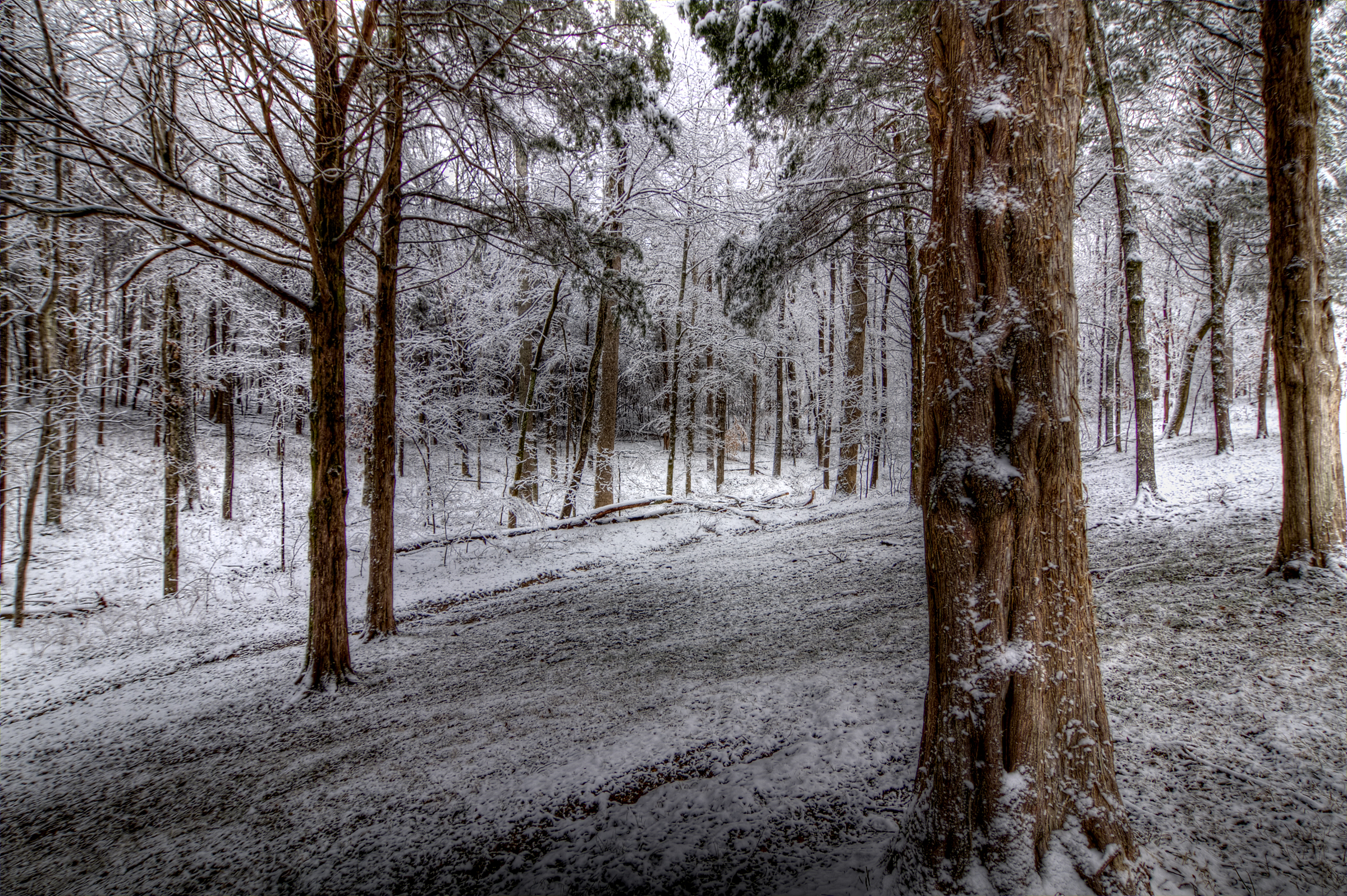 01 Frosted Forest.jpg