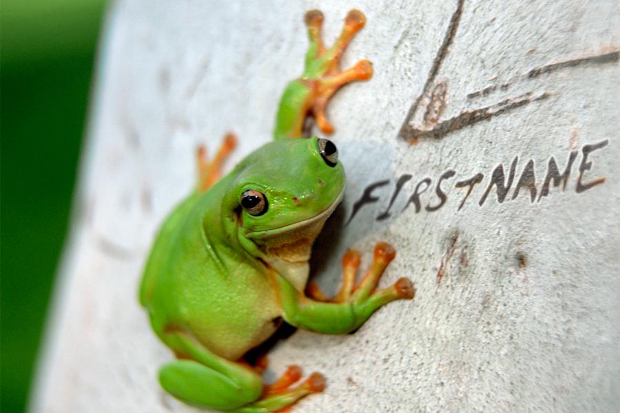 Jan - Frog