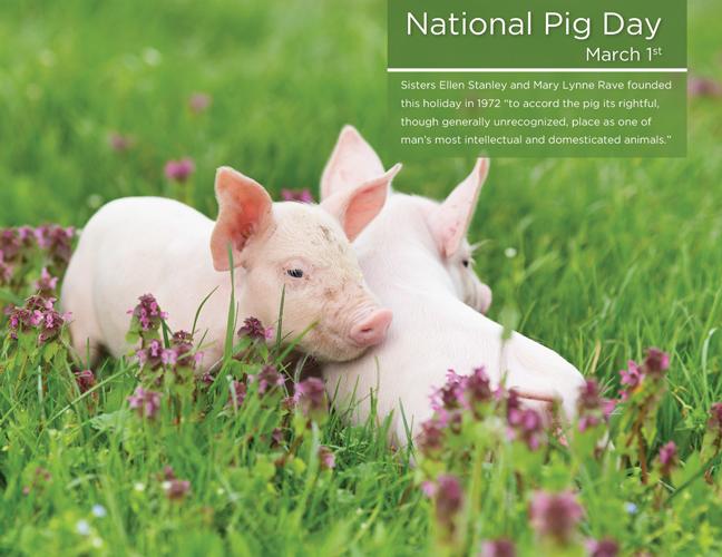 03 - Pig Day