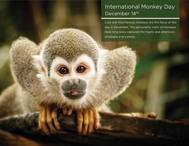 12 - Monkey Day