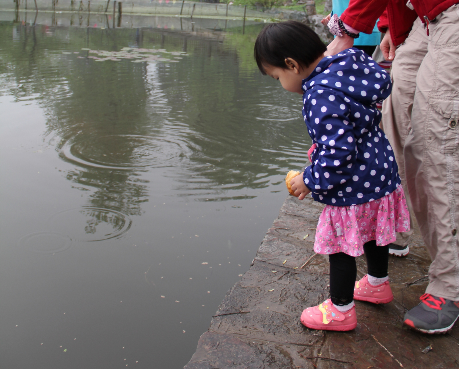 looking at the fish in the park
