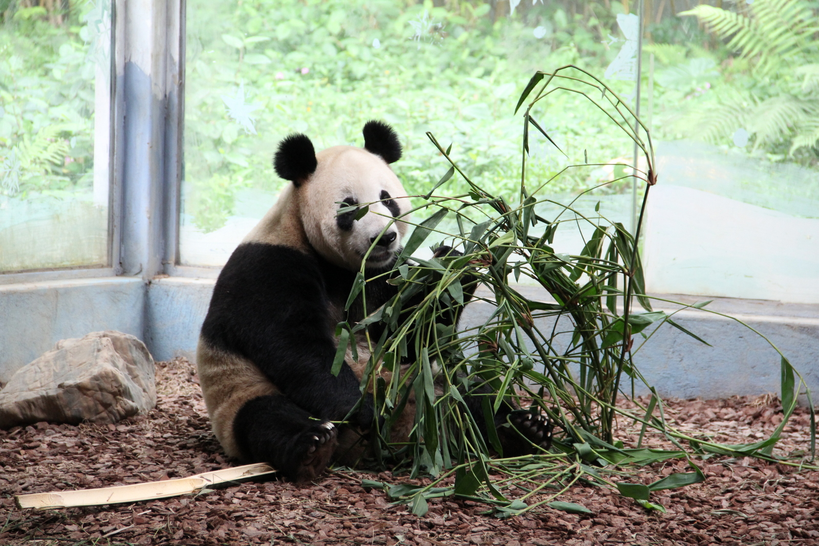 We love Pandas!
