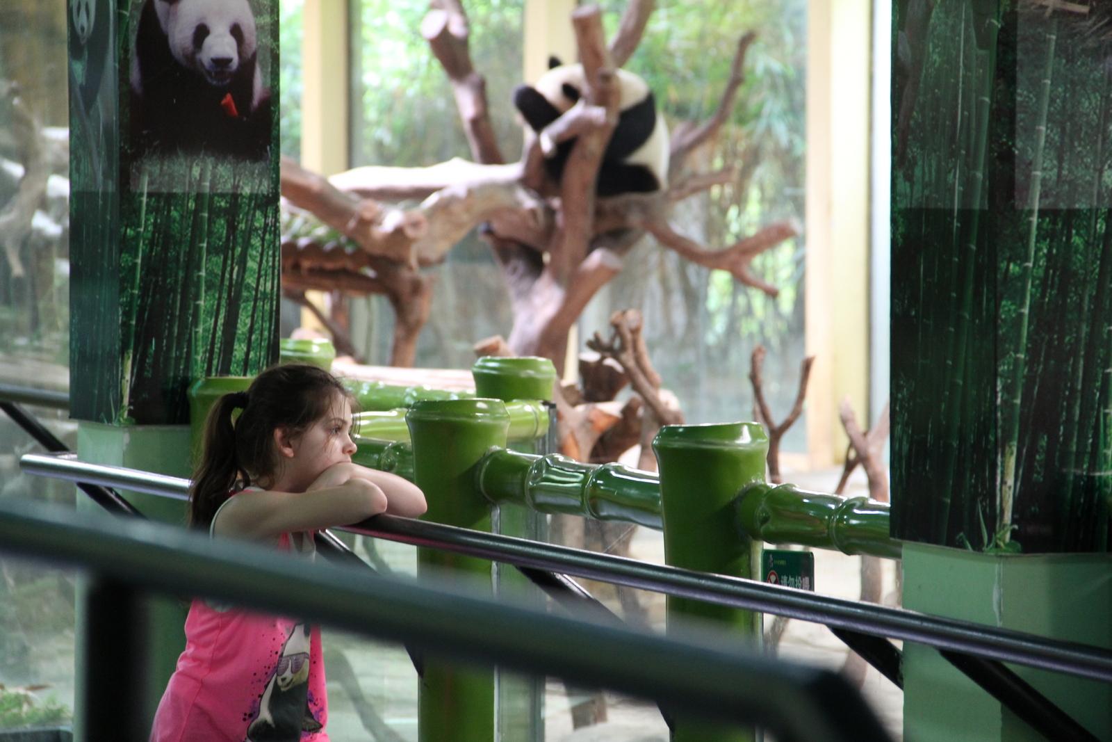 Just admiring the pandas.