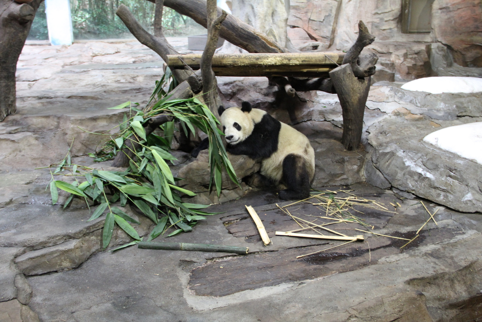 Okay just one more panda picture!