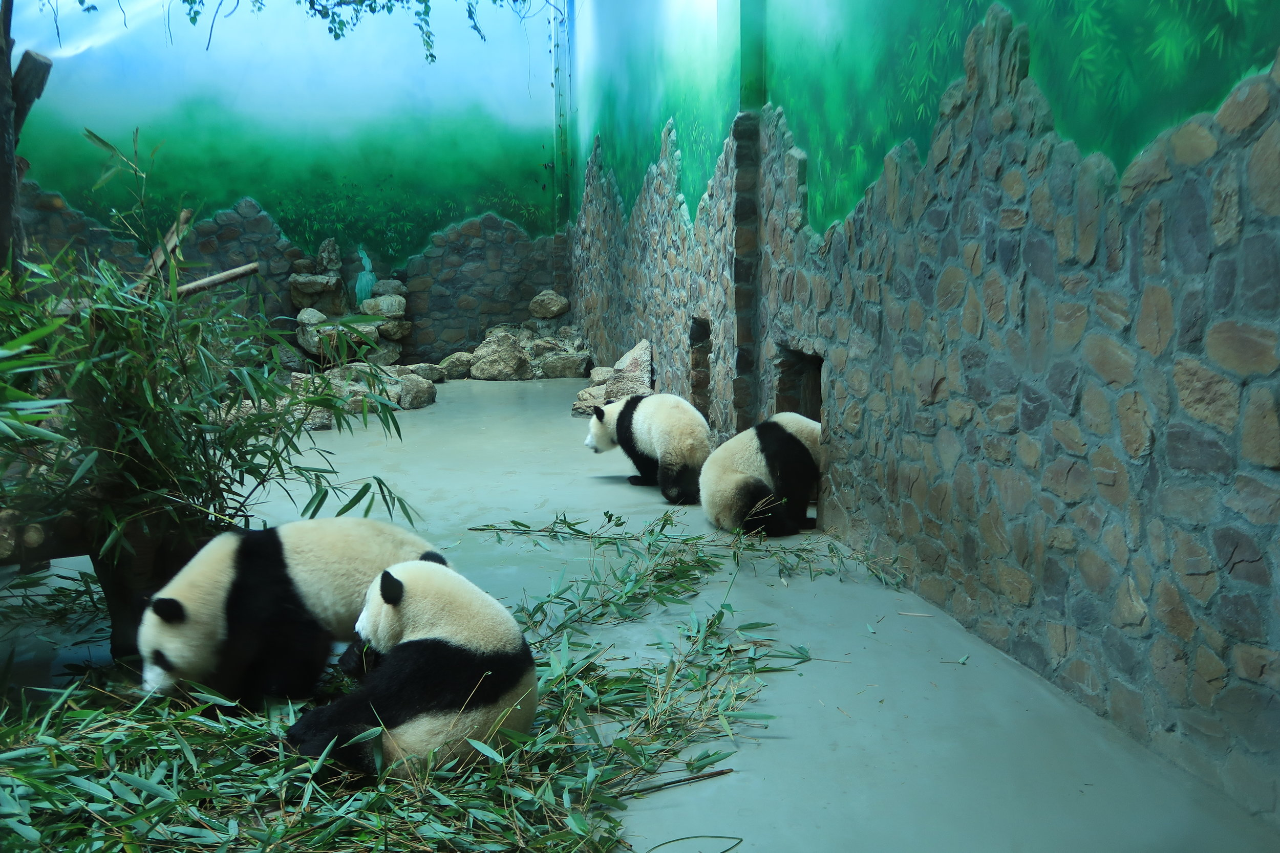 There were so many cute pandas and we have hundreds of pictures... so hard to choose just a few.
