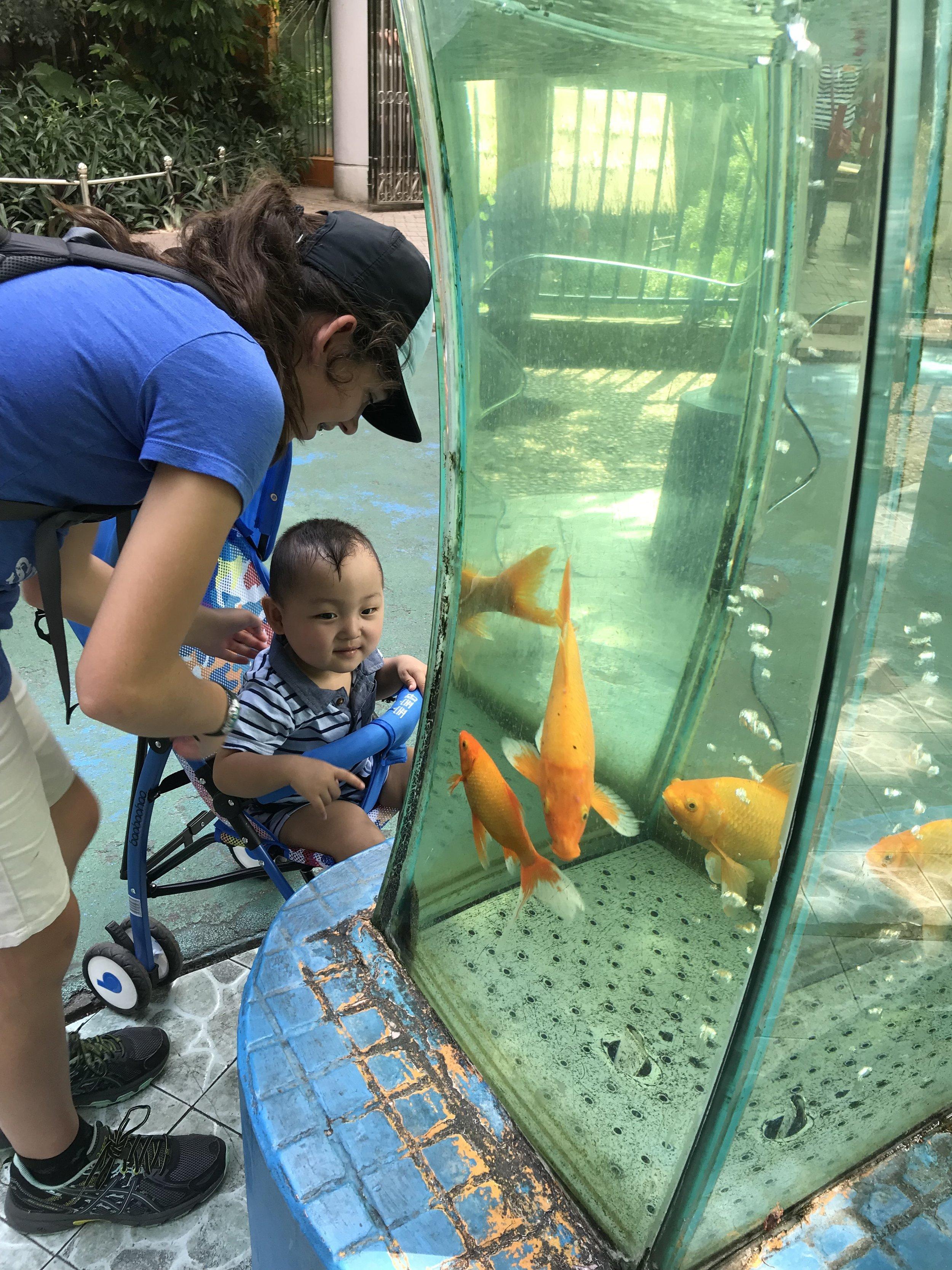 Honey, should we buy him a fish?