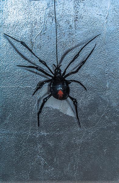Graffiti-6516_web.jpg